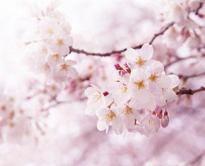 🍡お花見シーズン到来!🌸