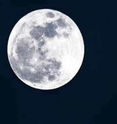 月下美人の花言葉…実は怖かった💦