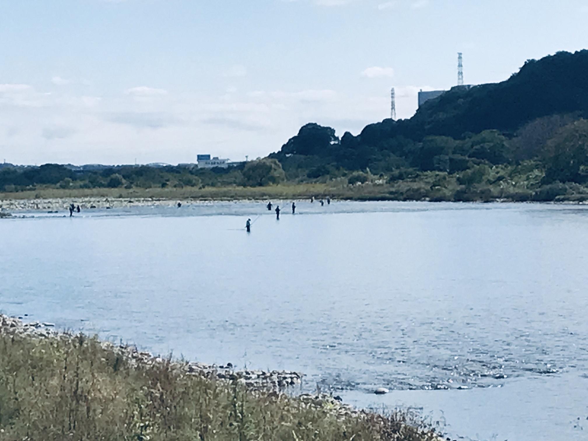 相模川水系の鮎解禁は今日が最終日